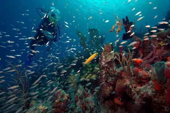 تاثیر افزایش دمای اقیانوس ها بر تغییر اکوسیستم های دریایی
