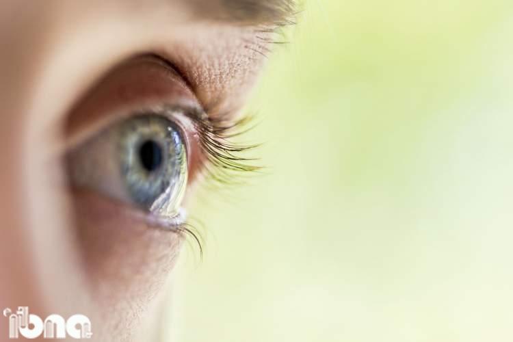 فرآیند تکامل چشم جانداران در یک کتاب