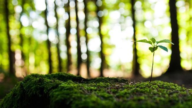پساکرونا؛ فرصتی برای بازیابی محیط زیست