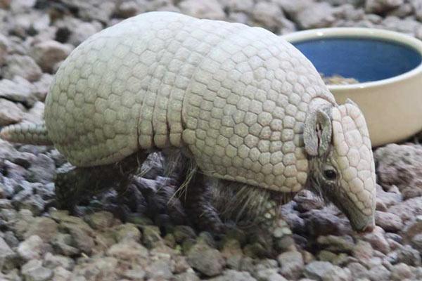 10 حیوان عجیب و غریب جهان