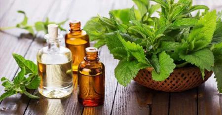با روغن پونه سرماخوردگی را سریع تر درمان کنید